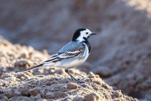 Glyphosat bedroht Vögel und Insekten. © Bigstock