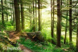 Baum des Jahres: mehr Aufmerksamkeit für Bäume