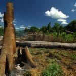 28. Tag der Tropenwälder: Die Abholzung steigt