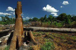 Tag der Tropenwälder: Entwaldung Brasilien 27 Prozent
