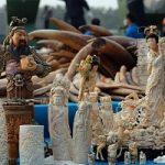 Warum stoppte China den Elfenbein Holocaust?