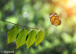 Erstmals ist der Rückgang der Insekten wissenschaftlich leget.