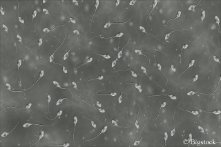 Luftverschmutzung-beeinträchtigt-Spermaqualität.j