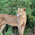 Internationaler Artenschutz: Schutz für wandernde Tierarten
