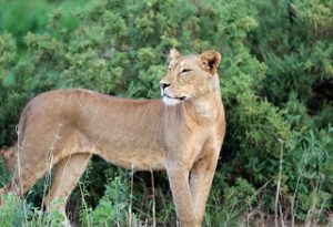 wild lebende, wandernde Tierarten - Internationaler Artenschutz - Photo by IISD/ENB | Francis Dejon