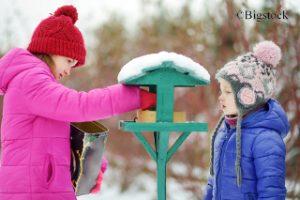 Vogelfütterung im Winter Vögel füttern