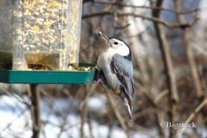 Futtersilo als Winterfutterstation für Vögel