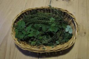 Weidenkörbchen mit verschiedenen Wildpflanzen darin