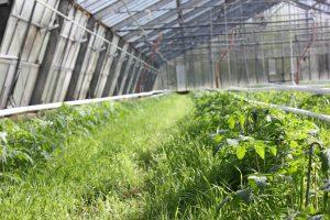 Ökologische Gemüsgärtnereien werden über die Regionalwert AG finanziert