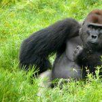 WWF Studie – Klimawandel bedroht Artenvielfalt
