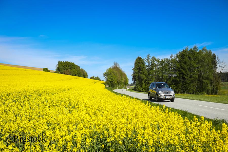 Fairpachten Rapsfeld bei Nandlstadt. Der Rapsanbau schadet der Artenvielfalt in der Landwirtschaft.