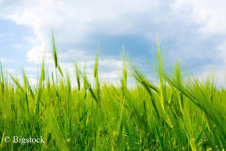 Greentech-Atlas 2018: Wirtschaftsfaktor Umwelttechnik mit solidem Wachstum.