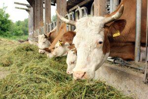 Cowfunding, nachhaltiges Grillfleisch