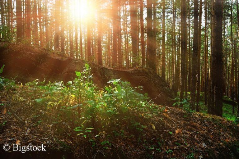Im Zuge der Renaturierung im Rahmen der Bonn Challenge will Zentralamerika über 16 Millionen Hektar Waldfläche wiederherstellen.