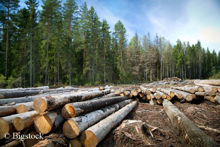 Ein Grund für den Erdüberlastungstag ist die hohe Abholzung der Wälder