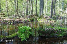 Auch der letzte verbliebene Urwald Europas gehört zu den Top 5 der bedrohten Naturerbestätten.