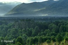 In Kasachstan beschlossen acht Länder, an der Bonn Challenge teilzunehmen.
