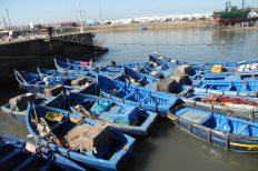Kein Raubbau an der Tiefsee fordern Nicht-Regierungsorganisationen.