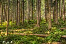 Der Waldklimafonds dient dazu, verschiedene Projekte zu fördern die zum Schutz und zum Kennenlernen der Wälder dienen.