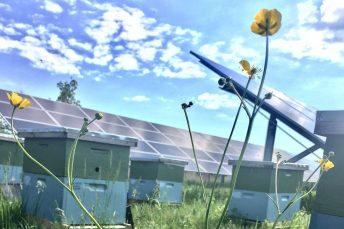 Solarhonig Bolton Bees