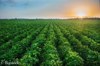 Die Förderung in der Landwirtschaft soll künftig an Umweltmaßnahmen gekoppelt sein.