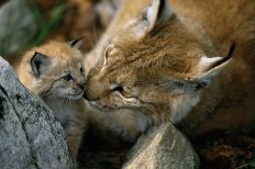 Weltkatzentag