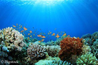 Der Jahresbericht zu den Klimatrends 2017 zeigt, dass es immer wärmer wird. Für Korallen stellt dies eine enorme Gefahr dar.