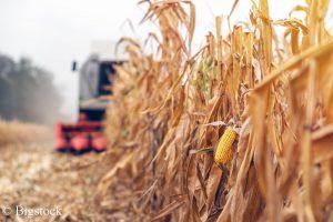 Umweltverbände sehen die Notwendigkeit der Soforthilfen für die Landwirtschaft. Sie appellieren jedoch auch an die Bauern, in Zukunft nachhaltiger zu wirtschaften.