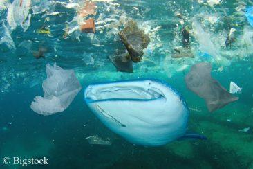 Die Umweltpolitik steht bei Problemen, wie unseren verschmutzen Meeren, in der Verantwortung.