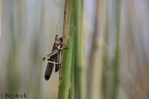 Der Klimawandel begünstigt die Aktivität von Insekten - Schädlinge werden die Nahrungsmittelproduktion belasten