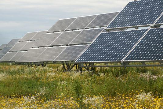 Solarparks können einen Beitrag zur Biodiversität leisten (Bild ©Bigstock)