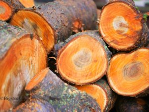 Zunahme der Baumrodung