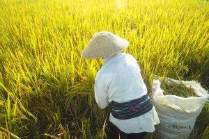 Biomasse aus Reisabfall
