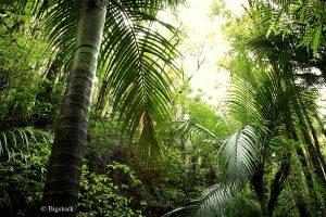 © Bigstock (STILLFX) Den Regenwald schützen mit einem Click