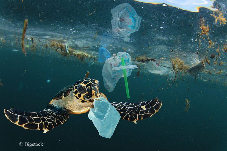 Neue Ansätze gegen die Plastikverschmutzung der Ozeane